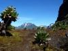Mt. Stanley und Baker vom Bamwanjara Pass