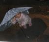 kleiner Bub im Regen in Tibet