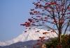 Die Annapurna II von Pokhara aus gesehen