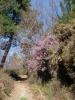 Jakobsweg - von Astorga nach Galizien